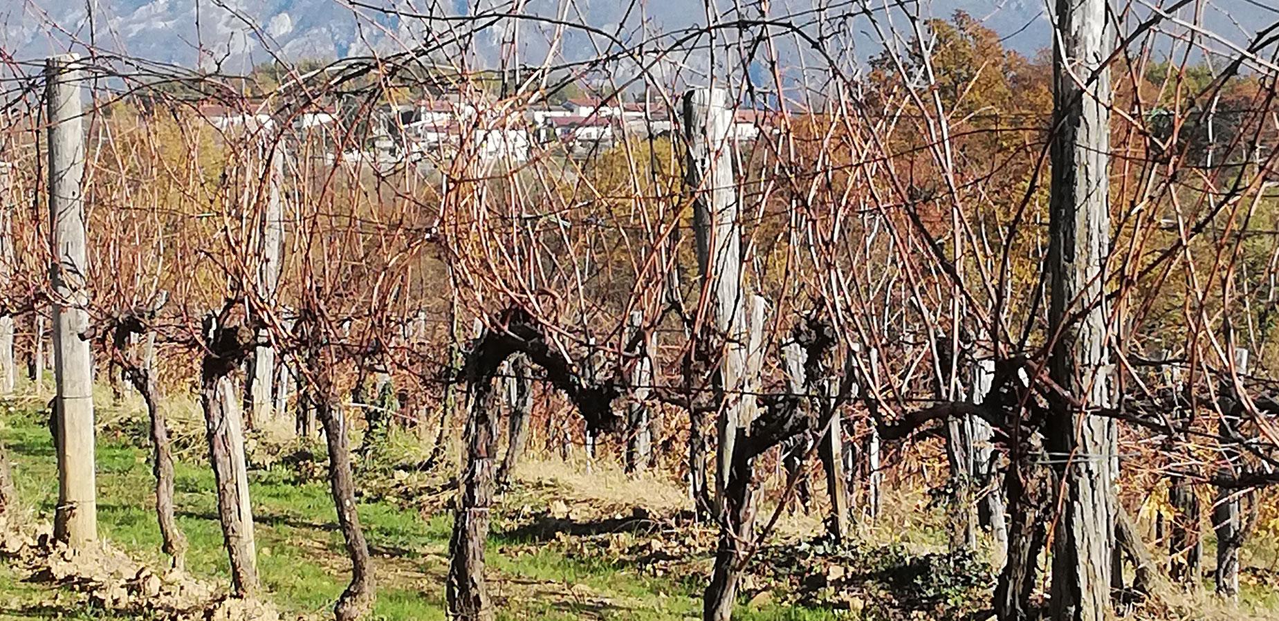 Лозя - винарска изба Trost - Словения