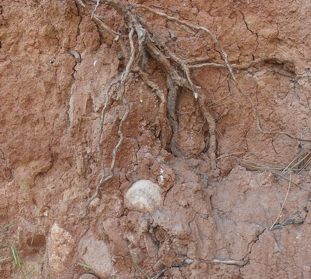 Почва пъстър пясъчник