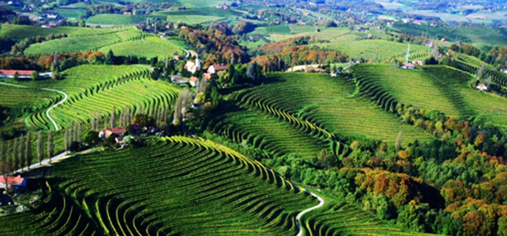 Словения – малка страна, големи вина