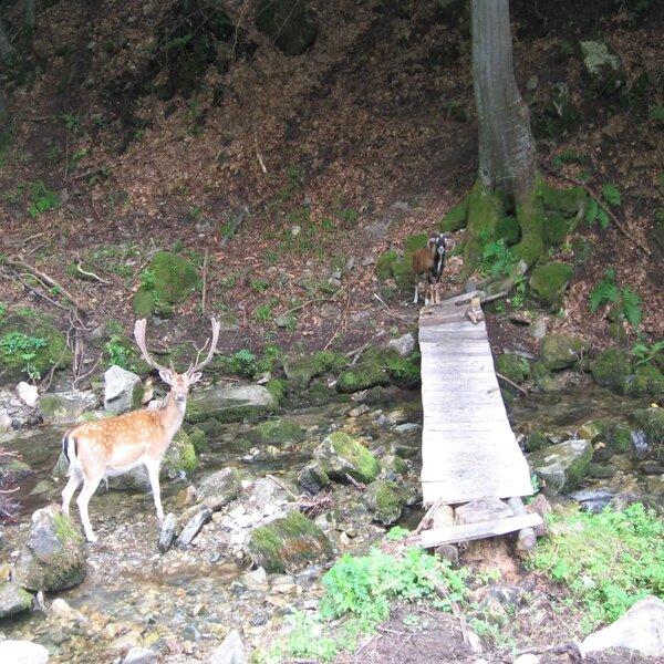 The nature around Borovitza