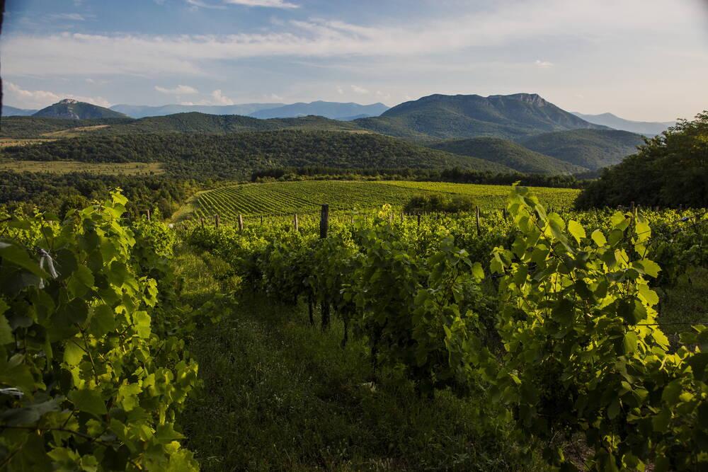 Borovitza Vineyard